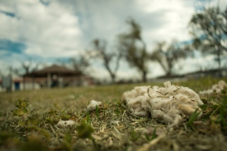 Cotton in the Park-1