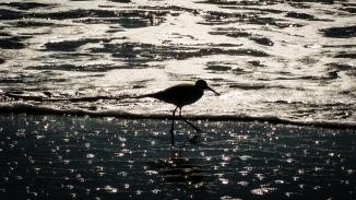 Myrtle Beach-3